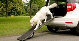 klappbare Hunderampe von Dogmaxx im Einsatz