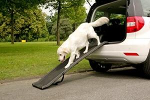 Details: klappbare Hunderampe von Dogmaxx im Einsatz