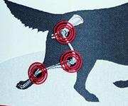 Hüftgelenk - Hund
